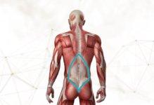 O que todo profissional da saúde deveria saber sobre fáscia toracolombar