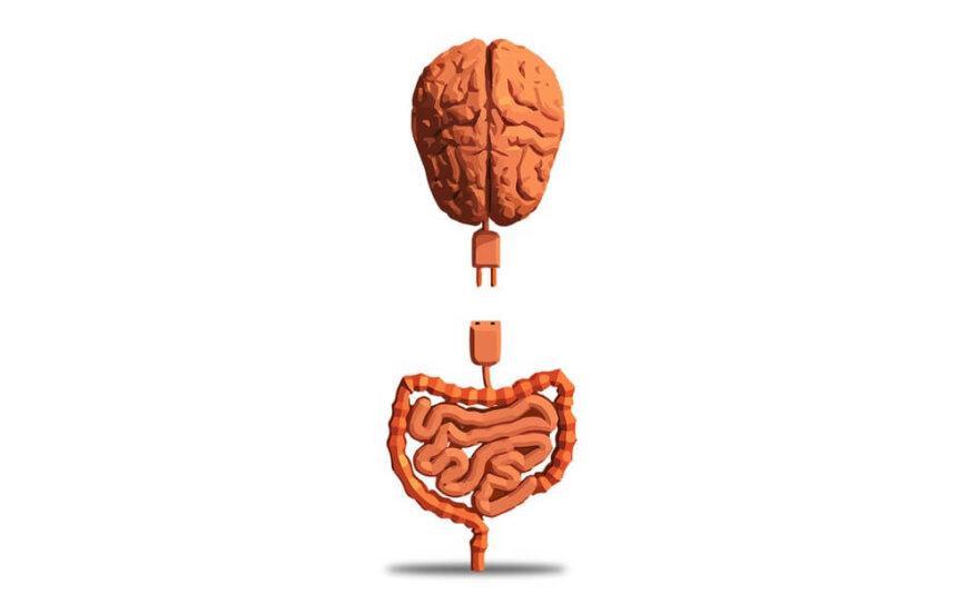 Sistema Nervoso Entérico - o segundo cérebro que sente